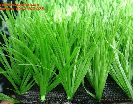 Cỏ nhân tạo sân bóng, Cỏ nhân tạo sân bóng LH24SC, Cỏ nhân tạo, Thảm cỏ, Dịch vụ cung cấp cỏ nhân tạo