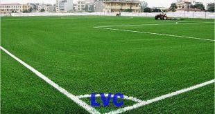 Cỏ sân bóng đá, Cỏ sân vườn, Kẹo cao su, Sân cỏ nhân tạo, Thảm cỏ