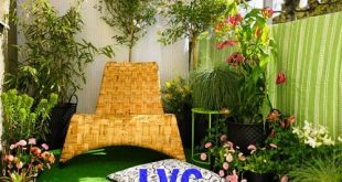 Cỏ sân vườn giá rẻ, Cỏ sân vườn, Cỏ tự nhiên, Cỏ nhân tạo, Sân vườn