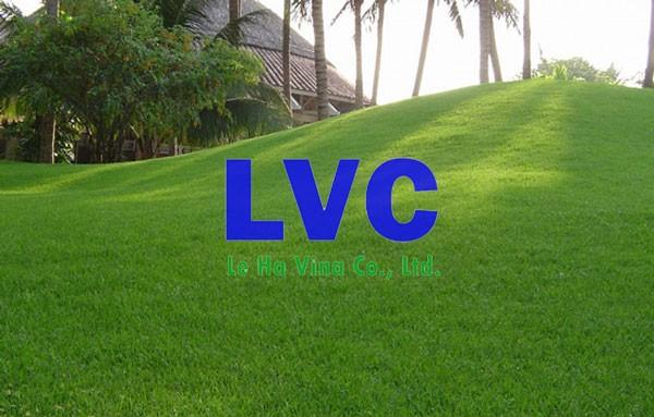 Bán cỏ nhân tạo Tại Biên Hòa, Cỏ nhân tạo, Lê Hà Vina, Giá cỏ nhân tạo, Cỏ tự nhiên