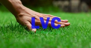 Trồng cỏ sân vườn, Cách trồng cỏ sân vườn, Cỏ giống, Cỏ sân vườn, Trải thảm