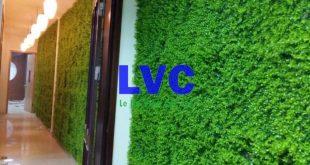 Cỏ nhựa tấm dán tường, Sản phẩm cỏ nhựa, Công ty Lê Hà Vina, Cỏ nhựa, Sử dụng cỏ nhựa