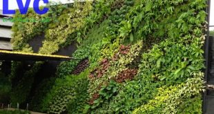 cỏ trang trí dán tường, tường cỏ trang trí, cỏ nhân tạo, mảng tường cỏ giả, tấm thảm cỏ nhựa