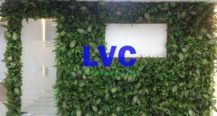 Tường cây giả, Cung cấp cỏ nhân tạo, Cỏ nhân tạo, Tường cây giả tại HCM, Tường cỏ giả