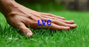 Chăm sóc sân cỏ nhân tạo, Sân cỏ nhân tạo, Lê Hà Vina, Vệ sinh sân cỏ nhân tạo, Thảm cỏ nhân tạo