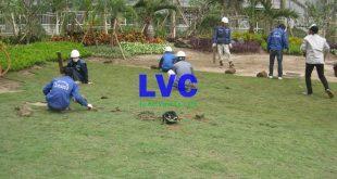 Cỏ nhân tạo sân vườn, Thi công cỏ nhân tạo, Công ty Lê Hà Vina, Sân cỏ nhân tạo, Cỏ nhân tạo sân bóng đá, Thảm cỏ treo tường