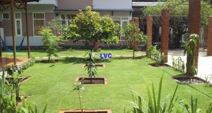 Cỏ trang trí sân vườn, Cỏ nhân tạo, Lê Hà Vina, Cung cấp cỏ nhân tạo, Cỏ nhân tạo để trang trí
