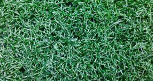 Cỏ nhân tạo thanh lý, Mua cỏ nhân tạo thanh lý, Cỏ thanh lý chất lượng, Thảm cỏ nhân tạo thanh lý, Cỏ nhân tạo thanh lý cho sân bóng